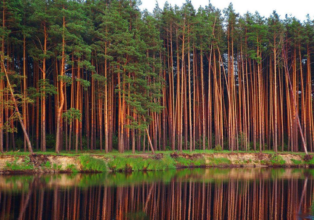 15 сентября стартуют Российские дни леса!